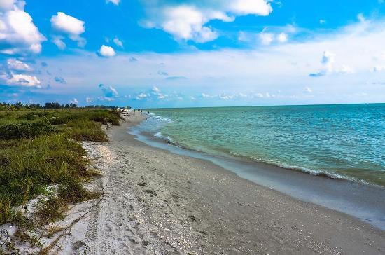 Sanibel Island Shelling - Sanibel & Captiva Islands