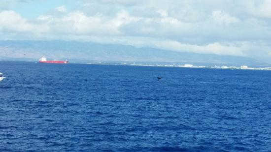 Star of Honolulu - Dinner and Whale Watch Cruises: 20160318_093433_large.jpg