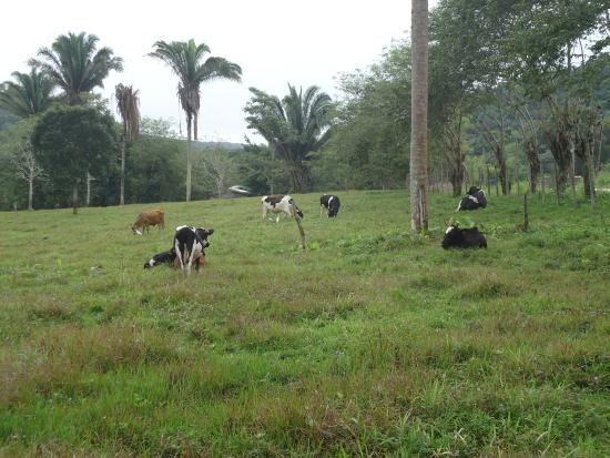 Cool M Farm Photo