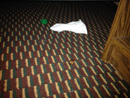 Budget Inn & Suites : Trash and roaches under bed.