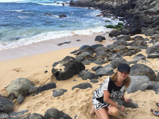 ‪‪Paia‬, هاواي: Trying to tell the turtles from the rocks‬