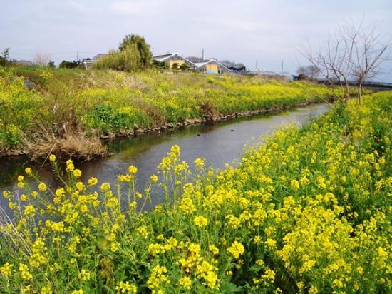Mekujiri River