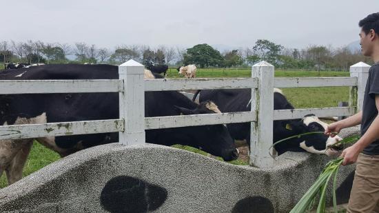 Ruisui Farm