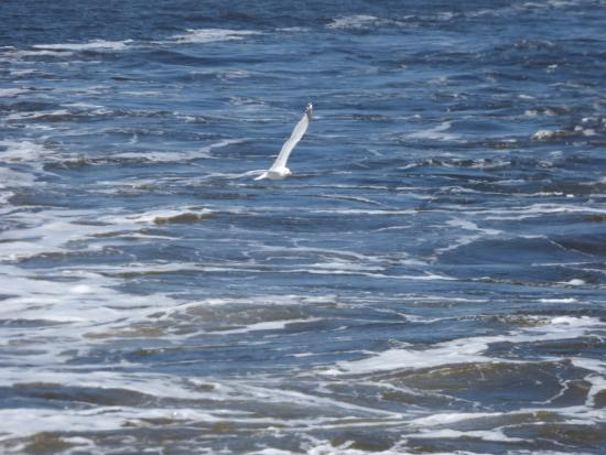 Ocracoke Island Visitor Center: This bird followed the ferry