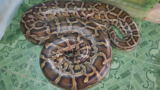 Bohol Python and Wildlife Park