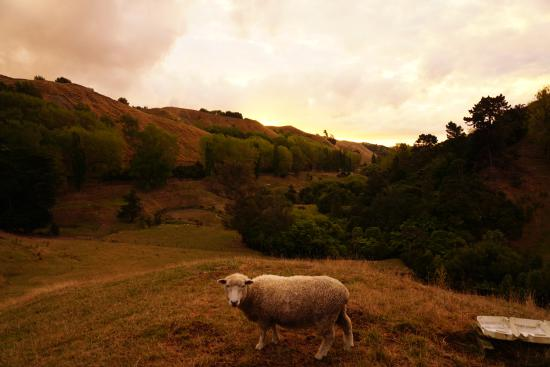 Rangitikei Farmstay: outside the gate