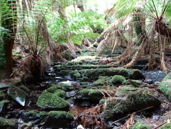 Arthur River, Australia: Nature walk
