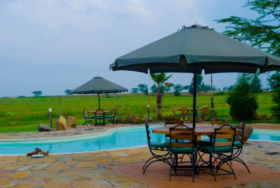 Pool Picture Of Ziwa Bush Lodge Nakuru Tripadvisor