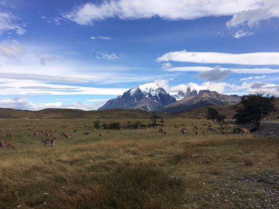 Patagonia Camp: Watching guanocos in Torres del Paine