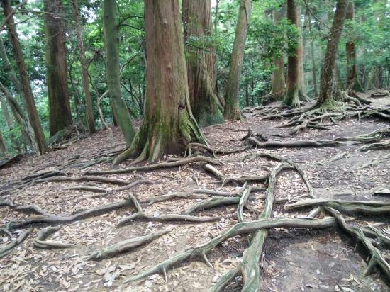 鞍馬山 - Picture of Mt. Kurama, Kyoto - TripAdvisor