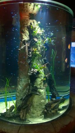 Malta National Aquarium - Magician show for kids. - Picture of Malta ...