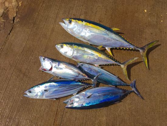 Deep Sea Fishing Kauai: Our catch
