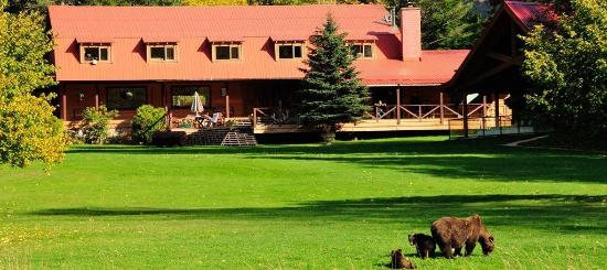 Stuie, Kanada: Grizzly Bear viewing on lawn at Tweedsmuir Park Lodge. Photo: Mike Wigle
