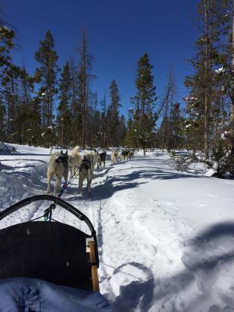 Dog Sled Rides of Winter Park (Fraser, CO): Top Tips ...