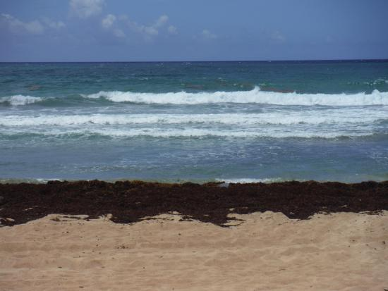 Seaweed problem - Picture of Excellence Punta Cana, Punta Cana