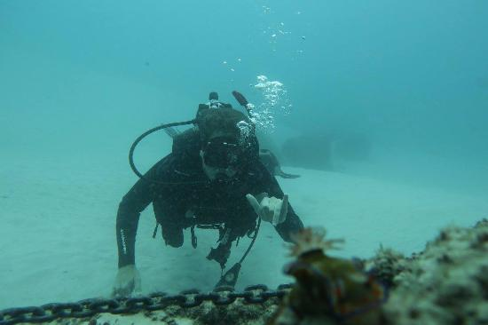 flvs marine 1 05 Course listing 2018-2019 course sequence  c13 9honors marine science 1 none magnet science requirement  f01 flvs spanish 1 9 none foreign language.