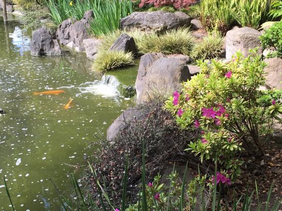 San Mateo, Καλιφόρνια: Japanese Garden