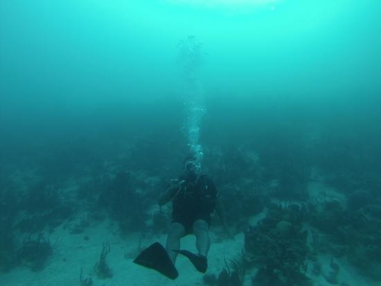 AquaAmys: My first dive with Amy. Awesome experience!!!