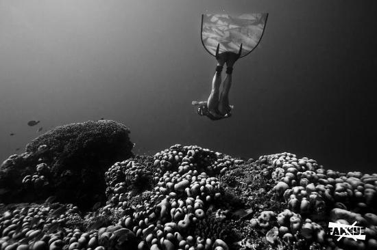 Freedive Blue Marine