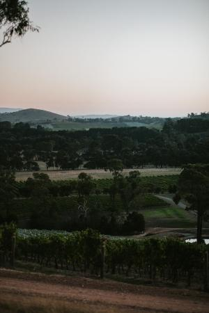 Sutherland Estate: sunset over the vines