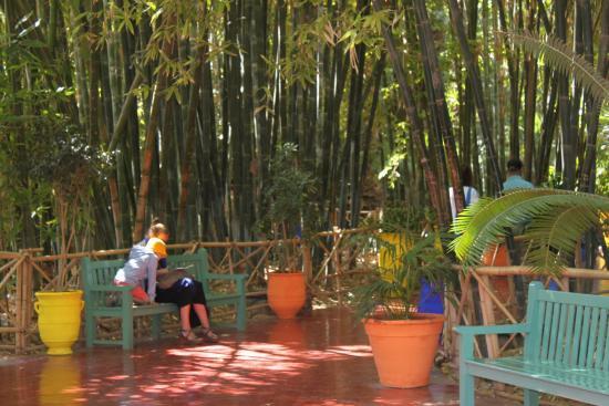 L 39 entr e du jardin photo de jardin majorelle marrakech - Jardin majorelle prix d entree ...