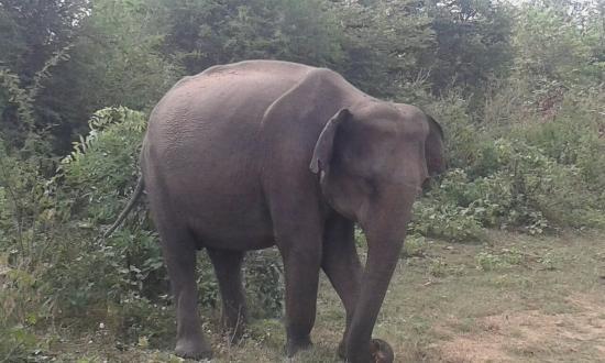Embilipitiya, Sri Lanka: 20160317_095246_large.jpg