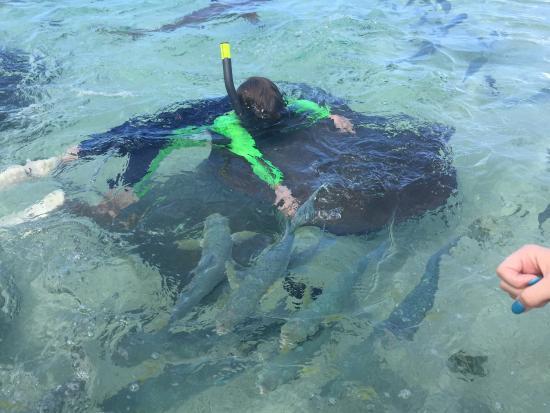 "Moorea, Fransız Polinezyası: My seven year old nephew ""riding"" a stingray."