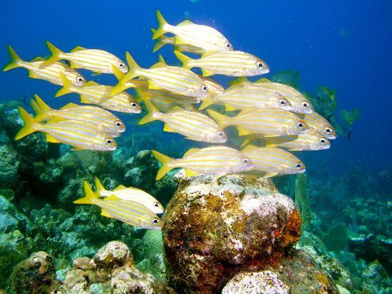 Roatan Reef Tours
