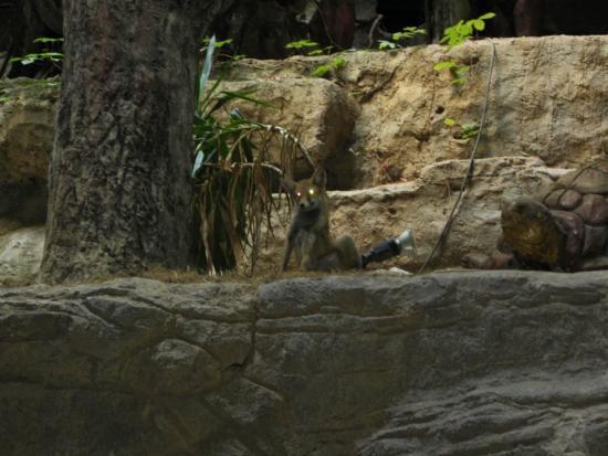 Naturland Forest Resort: Лиса осталась жить в зоопарке