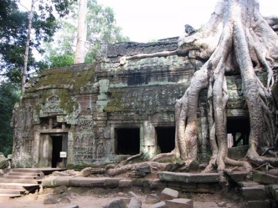 Angkor Driver Family
