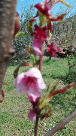 Agriturismo Pietra Antica: IMG_20160320_133301_large.jpg