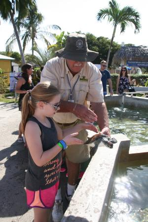 George Town, Gran Caimán: Brian handing our daughter a turtle to hold at the Turtle farm.