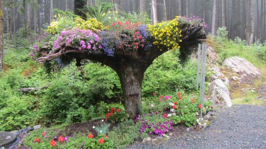 Jardim Inusitado Picture Of Glacier Gardens Rainforest