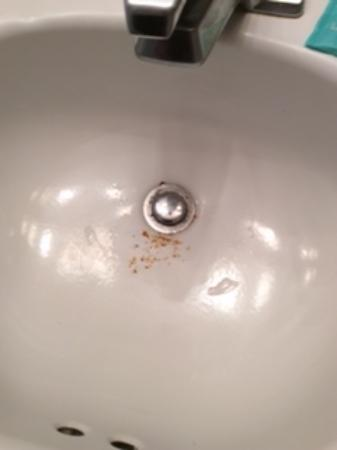 dead insects in sink picture of oak plantation resort kissimmee rh tripadvisor com