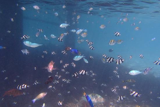 Leleuvia Island, Fiyi: underwater scenery