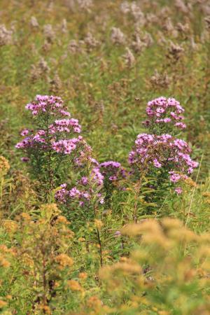 Tyringham Cobble: Wild flowers