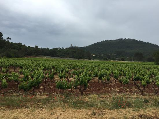 Taradeau, Frankrig: Vineyard.