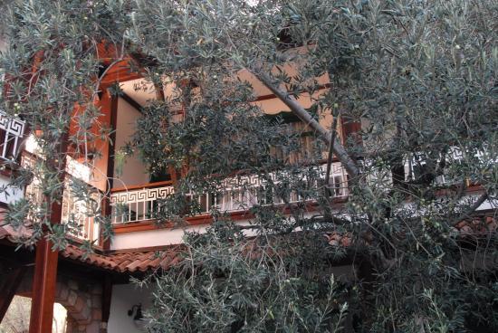 Foto de Calidus Hotel