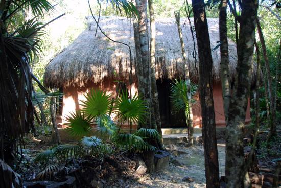 Jolie Jungle: Our Bungalow 5