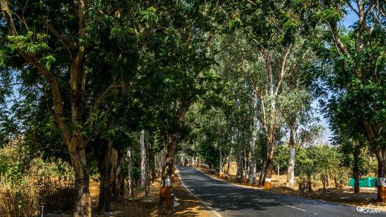 Dadra and Nagar Haveli, Indien: Lovely Spotting