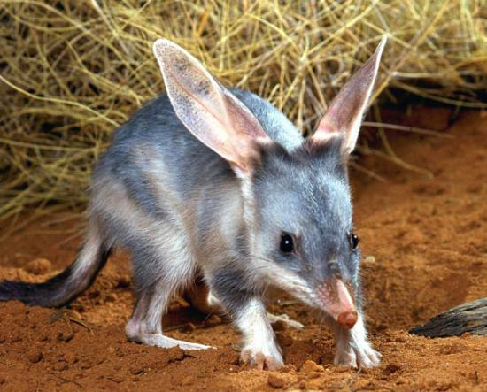 Charleville Bilby Experience