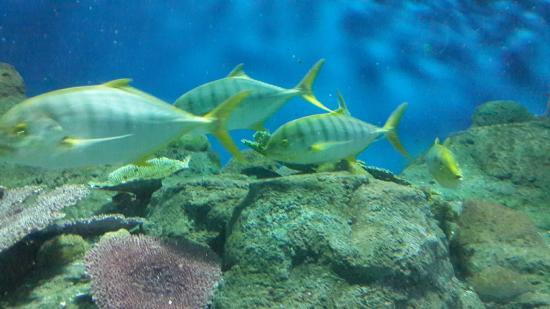 Underwater World Pattaya - Picture of Underwater World Pattaya, Bang ...