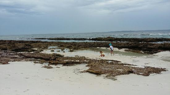 Hyams Beach, Australia: 20160318_120612_large.jpg