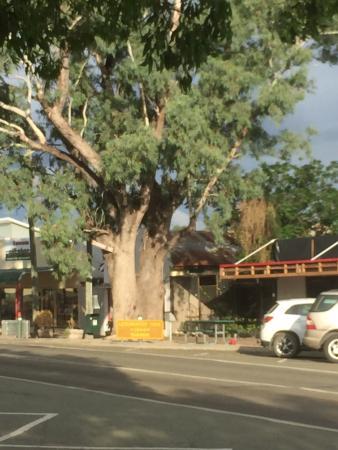 Leichhardt Hotel/Motel: Leichthardt Baum, leider nicht mehr mit Beschriftung