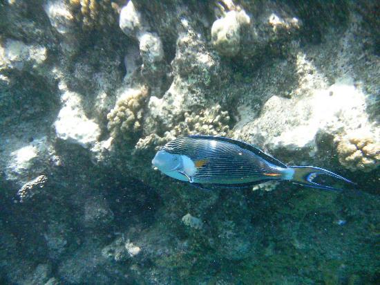 Faraana Reef Resort Photo