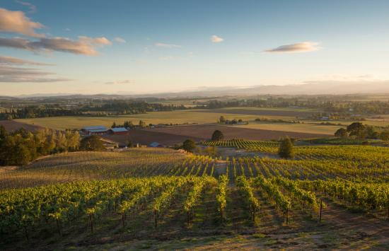 Amity, OR: Beautiful Oregon wine country at Keeler Estate Vineyard