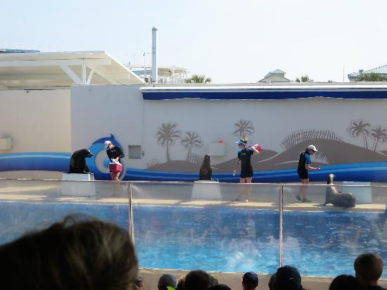 sea lion show picture of gulfarium marine adventure park fort rh tripadvisor com