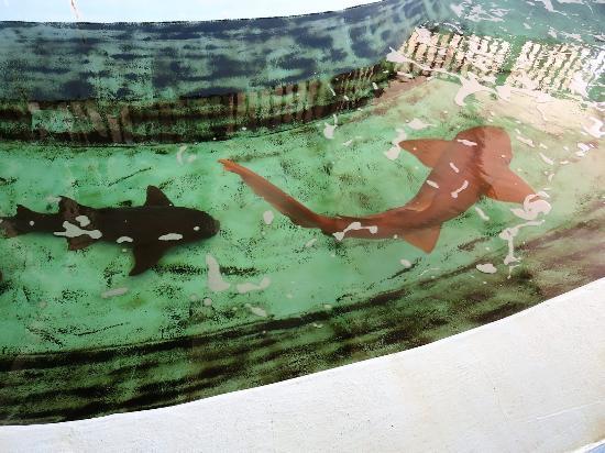 shark display picture of gulfarium marine adventure park fort rh tripadvisor co za