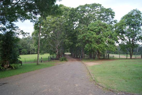 Blackwattle Farm Bed and Breakfast: Il viale di accesso alla struttura