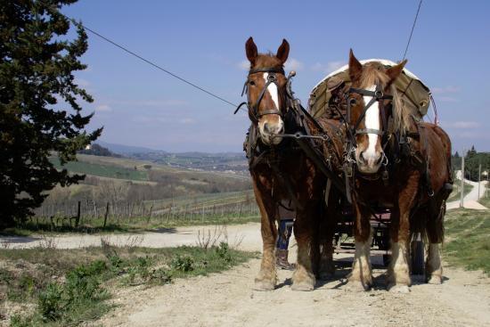Montagnana Val di Pesa, Włochy: i cavalli